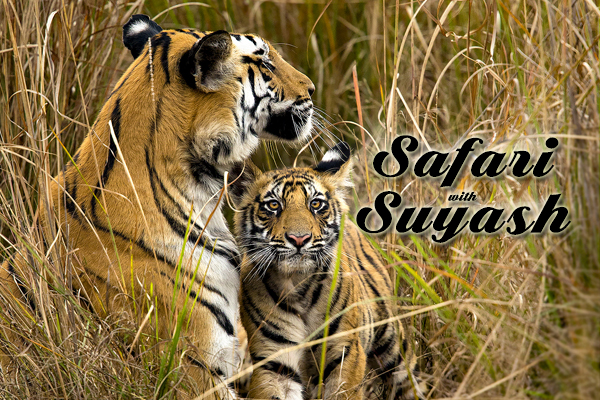Safari with Suyash, Tigar Safari in India